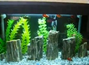 гнайс в аквариум
