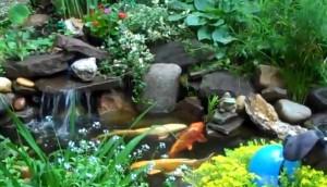 рибки в езеро